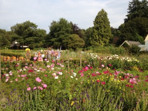 Theaterweek Kraaybeekerhof - elfjes tussen bloemen